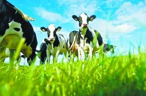已经完成对于辉山乳业合资公司的全资收购,菲仕兰终于达成所望