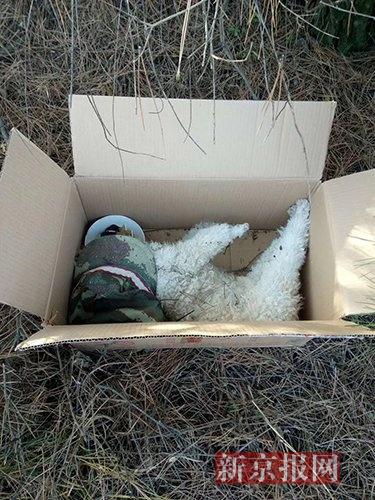 被碾死的宠物狗。图片来源于网络