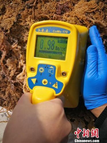 海藻类货物放射值。肇庆出入境检验检疫局供图