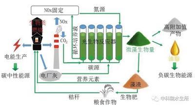 微藻不仅能吃下雾霾元凶,还能产出上等生物油脂。