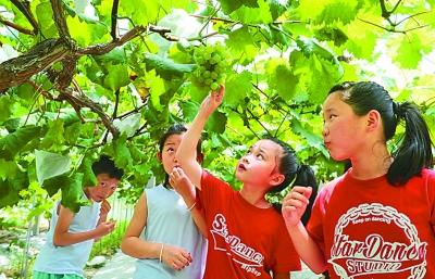 游客在下姜村采摘葡萄。光明图片