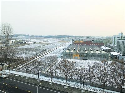"""华农校园内的18亩试验田,""""华恢1号""""曾诞生于此。 殷梦昊 摄"""