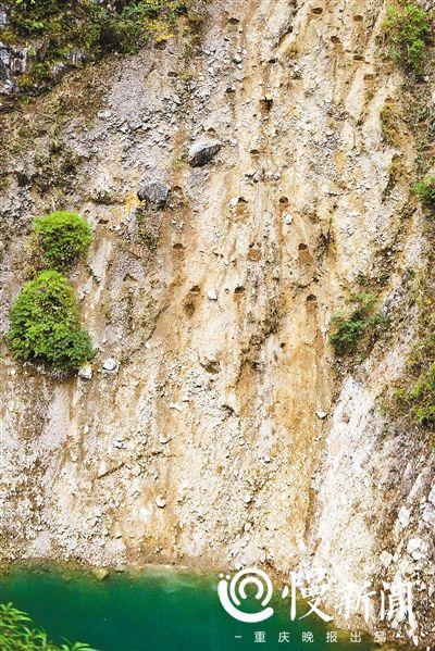 """重庆巫溪石漠化改造:""""长""""在人肩背上的陡崖森林"""