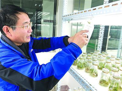 """中国转基因大米""""出国记"""":本是科研任务之外附加题"""