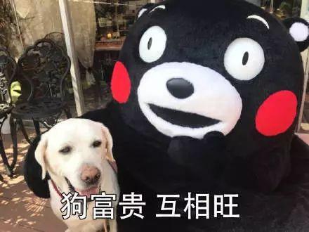 斗图|新年祝福语表情动画动态的表情包虚脱图片