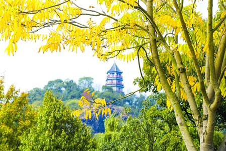 辰山植物园秋景 /蓝风