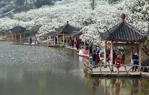 ▲3月11日,游客在重庆市北碚区澄江镇上马台村赏花踏青。 图片来源:新华社