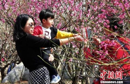 3月12日,徐州民众纷纷相约龟山景区探梅园,前来踏青赏梅,感受春天的气息。 海辉 摄