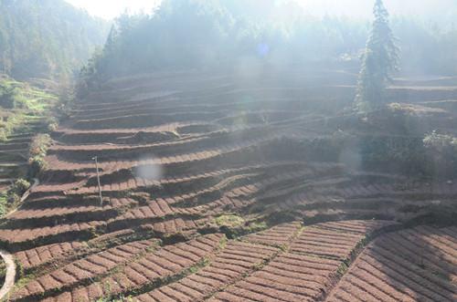 石柱:六塘村育苗厚朴50亩 拓宽农民增收致富渠道