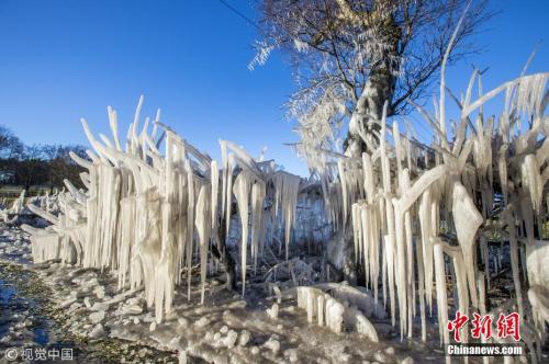 """资料图:受风暴""""埃莉诺""""影响,英国多地大雪降温,气温达到零下10℃。在苏格兰地区,甚至出现了冰冻植物的景观。 图片来源:视觉中国"""
