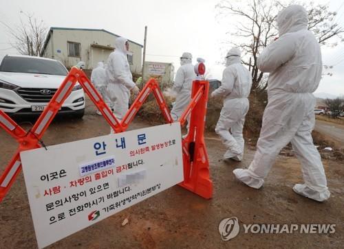 为遏制禽流感蔓延 韩国当局扑杀逾65.4万只家禽