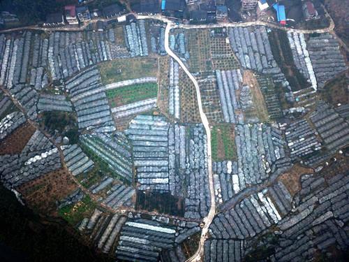资料图片:这是2017年12月28日拍摄的广西融安县大将镇东潭村大潭屯的金桔种植园。新华社记者 张爱林 摄