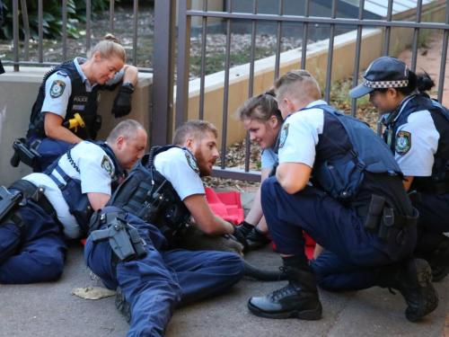 """澳媒:澳悉尼一只袋鼠出逃 清晨""""狂奔""""在大桥上"""