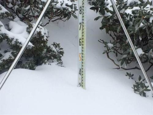 """苗栗县雪霸公园管理处指出,雪山主峰沿线海拔高于369山庄的山区,普遍已积雪超过30厘米。图片来源:""""中时电子报"""""""