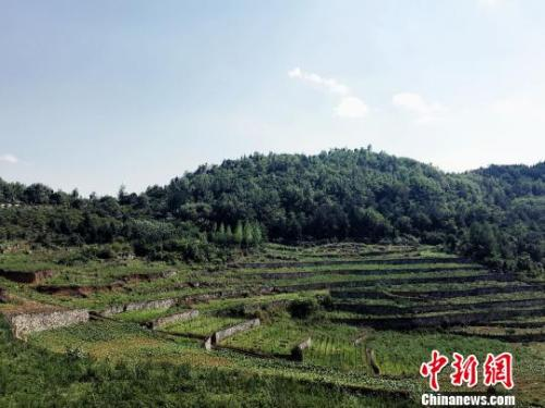 资料图:贵州黔西土地生态整治后,提高了生态经济效益和社会经济持续发展能力。 杨云 摄