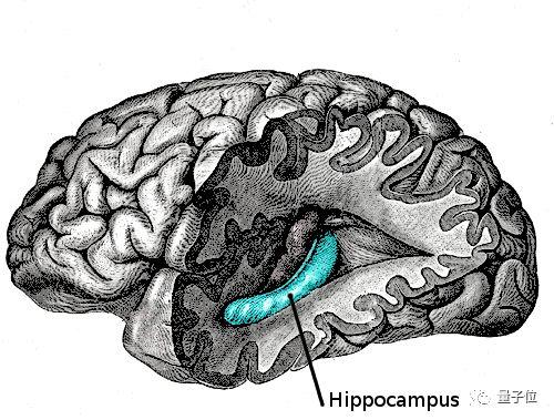 脑子瓦特?记忆力受损?试试AI调控的闭环电击颞叶疗法