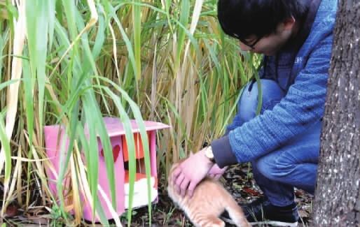 用快递盒造别墅 给小动物一个家 小动物 快递