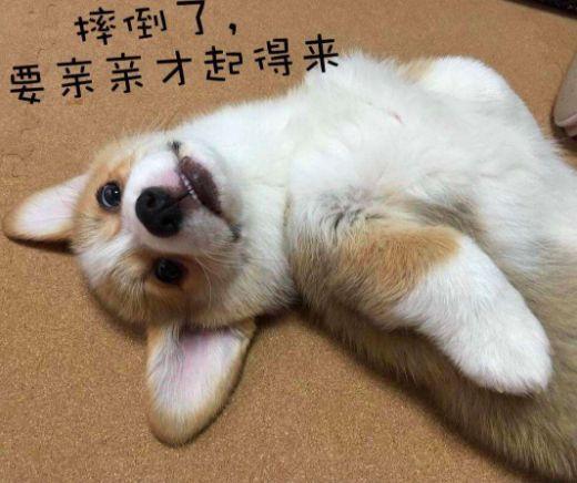 寄养在宠物店或者朋友家 怕它们吃不好睡不好 托运带上飞机 怕它们
