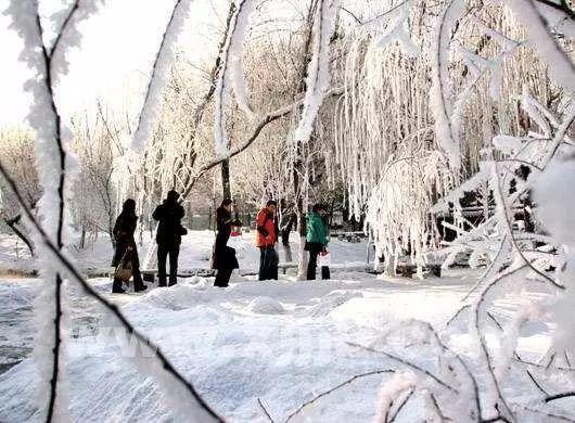 """冷空气将带降雪来新疆""""拜年"""",乌鲁木齐气温走晴冷路线"""