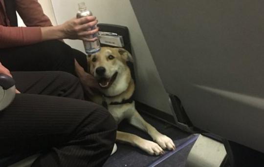 女童登机被狗咬伤 美西南航空却坚称不改