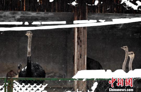 """摄   合肥市野生动物园副园长江浩介绍说:""""像日本猴,河马,斑马,大象等"""