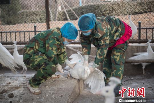 太原动物园为千只鸟禽打疫苗 预防禽流感