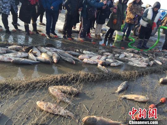 头网出鱼6万余斤。 于海洋 摄