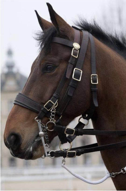 法国总统马克龙向中国国家主席习近平赠送的法国共和骑兵队名为Vésuve de Brekka的8岁马匹。本文图片均来自封面新闻