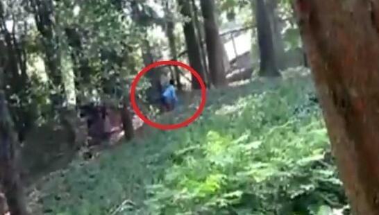 """印度男子潜入动物园猛兽区 称要与母狮子""""聊聊"""""""