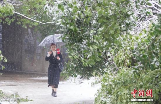 1月4日,安徽合肥迎来漫天大雪。中新社记者 张娅子 摄