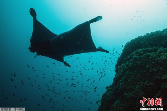 研究称全球海洋酸化现象推进快速 温室效应严重