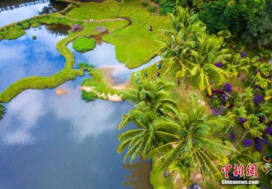 资料图 航拍海南呀诺达热带雨林景区湿地。骆云飞 摄