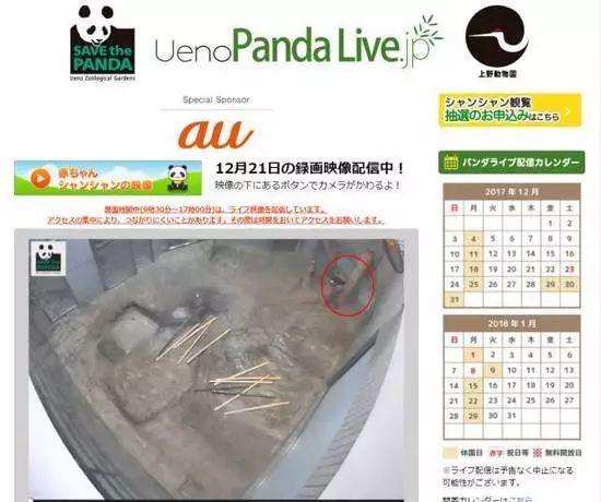 ▲2017年12月21日下午4时,通过上野动物园的直播窗口看到的香香(红圈中)。