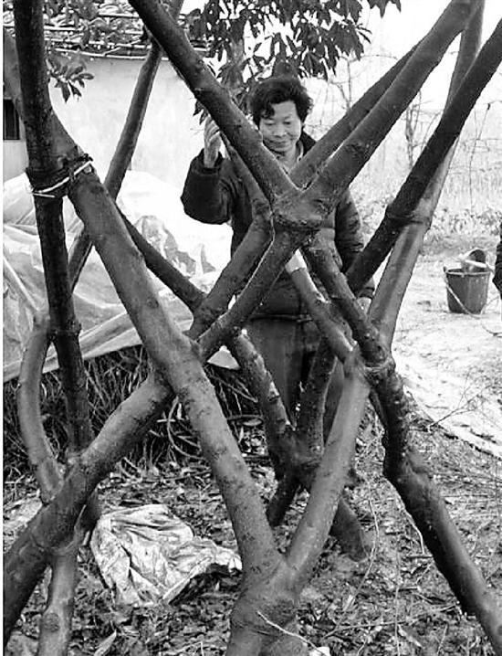 周肖明经常去田里和树说话。 钱江晚报 图