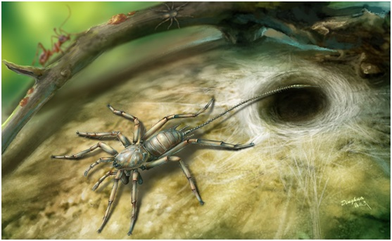 应氏奇美拉蛛的复原图(杨定华绘制)。受访者供图
