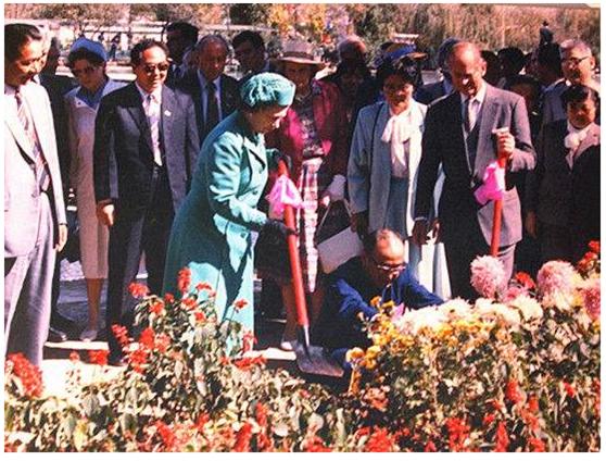 女王在昆明大观公园内种玫瑰。