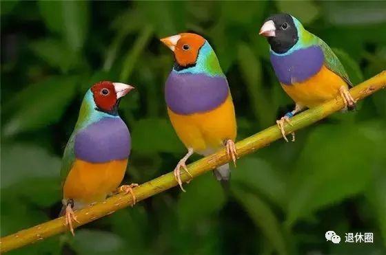 群友们早上好,动态喜鹊来报到 祝大家喜上眉梢,喜事到家