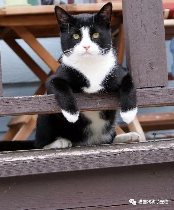 看看这些黑猫警长多可爱