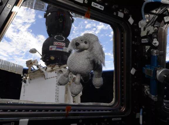 """国际空间站迎来新""""居民"""":可爱的毛绒"""