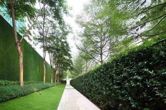 入口菩提树广场树阵大气磅礴平面设计图片