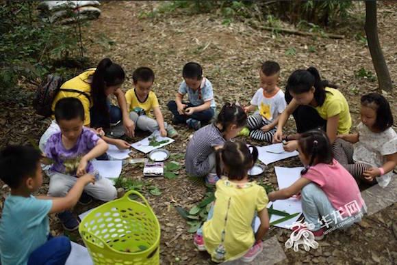 让幼儿教育回归自然 重庆有一所森林幼儿园|幼儿园