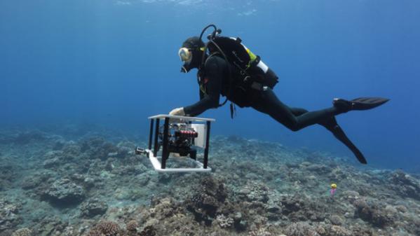 这些珊瑚礁的3D地图可以帮助我们拯救它们