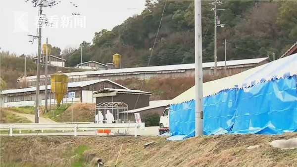 视频|日本爆发首例高致病性禽流感 9.2万只活鸡遭扑杀