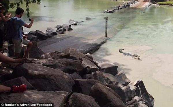 鳄鱼突然窜出抢走大鱼 男子被吓到膝盖发软