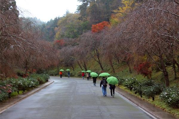 通往美术馆的山路(以下图片未经特别说明均为作者拍摄)