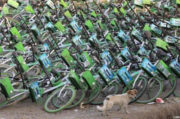 牛拜共享单车被弃路边 押金难退疑似倒闭