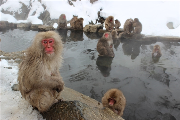 日本科学家利用温泉提取氢燃料:不产生