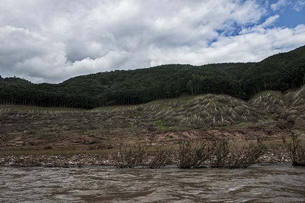 因清库被砍伐的大片橡胶林。受访者供图