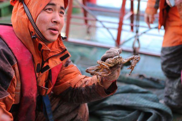 中国第七次北极科考队结束北冰洋作业,考察队员展示底栖生物拖网捕获的螃蟹。新华社