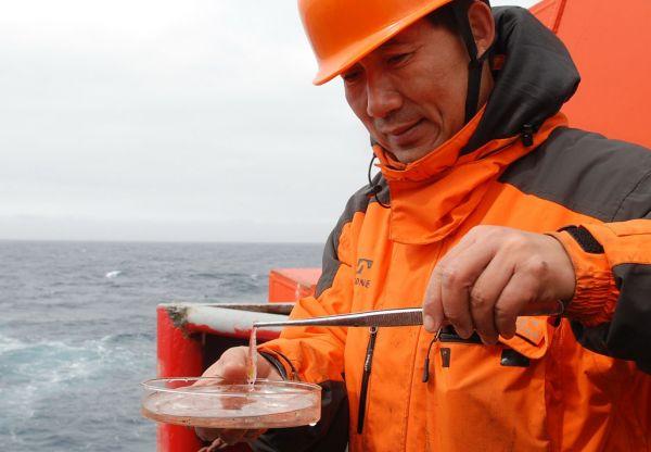 资料图片:中国第24次南极科学考察队大洋考察队队长张永山在观察一只南极磷虾(2008年1月4日摄)。新华社记者张建松摄